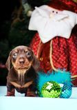 Años Nuevos de abeto con el perro basset de los juguetes Imagenes de archivo