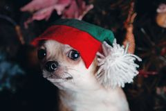 Años Nuevos de abeto con el perro basset de los juguetes Foto de archivo