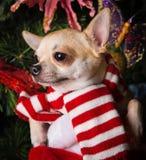 Años Nuevos de abeto con el perro basset de los juguetes Imagen de archivo libre de regalías