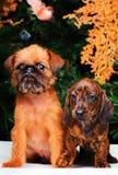 Años Nuevos de abeto con el perro basset de los juguetes Fotos de archivo libres de regalías