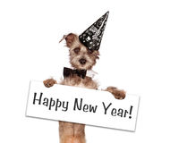 Años Nuevos del perro de Terrier Fotografía de archivo