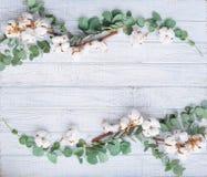 Aún la vida natural con el eucalipto y el algodón florece Imágenes de archivo libres de regalías