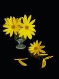 Aún-vida amarilla Fotos de archivo