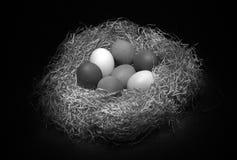 Aún vida blanco y negro con los huevos Foto de archivo