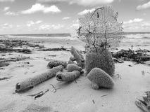 Aún vida blanco y negro hermosa oceánica hecha de esponja del mar Fotografía de archivo libre de regalías