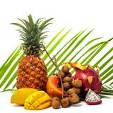 Aún vida brillante de diversas frutas tropicales en una palma verde l Fotos de archivo