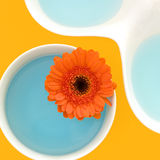 Aún vida colorida con el flor del gerber Fotografía de archivo