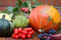 Aún vida colorida con las plantas de la caída Foto de archivo libre de regalías