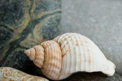 Aún-vida con el shell Foto de archivo libre de regalías