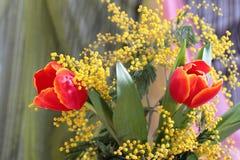 Aún-vida con la mimosa amarilla de los tulipanes rojos Imagen de archivo libre de regalías