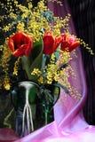Aún-vida con la mimosa olorosa del amarillo rojo de los tulipanes Fotografía de archivo libre de regalías