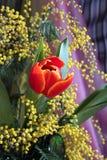 Aún-vida con la mimosa olorosa del amarillo rojo de los tulipanes Foto de archivo