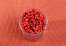 Aún-vida con las bayas de serbal rojas naturales frescas Foto de archivo libre de regalías