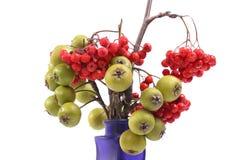 Aún-vida con las bayas de serbal rojas naturales frescas y las pequeñas peras verdes en un florero coloreado Fotografía de archivo libre de regalías