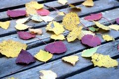 Aún-vida con las hojas caidas coloridas en la tabla vieja Foto de archivo