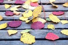 Aún-vida con las hojas caidas coloridas en la tabla vieja Fotografía de archivo
