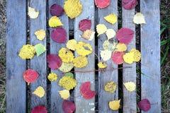 Aún-vida con las hojas caidas coloridas en la tabla vieja Fotografía de archivo libre de regalías