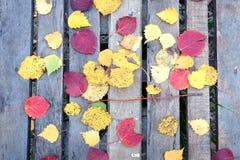 Aún-vida con las hojas falled coloridas en la tabla vieja Foto de archivo