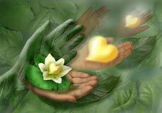 Aún-vida con las manos, la hoja y la flor como corazón Foto de archivo