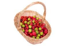 Aún-vida con las manzanas rojas frescas, serbal rojo Foto de archivo libre de regalías