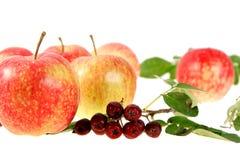 Aún-vida con las manzanas rojo-amarillas y ashberry Foto de archivo