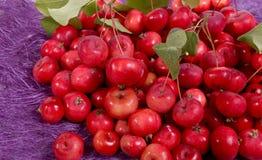 Aún-vida con las pequeñas manzanas rojas frescas Imagenes de archivo