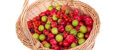 Aún-vida con las pequeñas manzanas rojas frescas, el serbal rojo y las peras verdes Imagenes de archivo