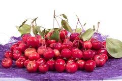 Aún-vida con las pequeñas manzanas rojas frescas, en el fondo blanco Foto de archivo