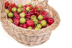 Aún-vida con las pequeñas manzanas rojas frescas, en el fondo blanco Foto de archivo libre de regalías