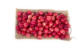 Aún-vida con las pequeñas manzanas rojas frescas, en el fondo blanco Fotografía de archivo