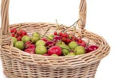 Aún-vida con las pequeñas manzanas rojas frescas, en el fondo blanco Imagen de archivo libre de regalías