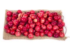 Aún-vida con las pequeñas manzanas rojas frescas, en el fondo blanco Imagen de archivo