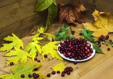 Aún-vida con los arándanos en un platillo blanco y las hojas de otoño Imagen de archivo libre de regalías