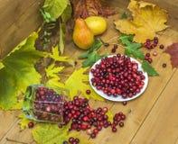 Aún-vida con los arándanos, las peras y las hojas de otoño Foto de archivo