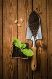Aún-vida con los brotes y el utensilio de jardinería Foto de archivo libre de regalías