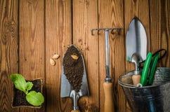 Aún-vida con los brotes y el utensilio de jardinería Fotografía de archivo