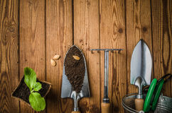 Aún-vida con los brotes y el utensilio de jardinería Imagen de archivo