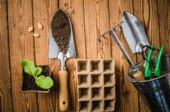 Aún-vida con los brotes y el utensilio de jardinería, visión superior Imagen de archivo