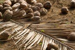 Aún-vida con los cocos Imagen de archivo