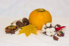 Aún-vida con los conos anaranjados del calabacín y la hoja de arce amarilla Imagen de archivo