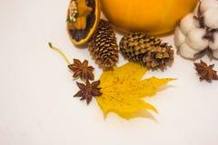 Aún-vida con los conos anaranjados del calabacín y la hoja de arce amarilla Fotos de archivo libres de regalías