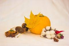 Aún-vida con los conos anaranjados del calabacín y la hoja de arce amarilla Fotografía de archivo