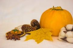 Aún-vida con los conos anaranjados del calabacín y la hoja de arce amarilla Fotografía de archivo libre de regalías
