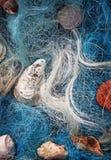 Aún-vida con los seashells Imagen de archivo libre de regalías