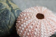 Aún-vida con los shelles Fotos de archivo