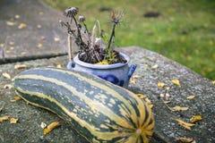 Aún-vida con un calabacín grande en otoño Imagen de archivo libre de regalías