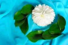 Aún-vida con un crisantemo Imagen de archivo libre de regalías