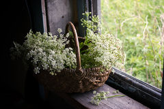 Aún-vida con un manojo de flores salvajes blancas en una cesta Foto de archivo libre de regalías