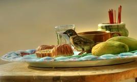 Aún-vida con un sparrow-2 Fotos de archivo libres de regalías