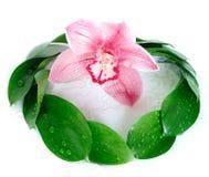 Aún-vida con una orquídea Foto de archivo libre de regalías